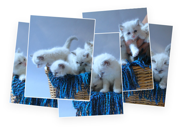 Discover Duplicates & Similar Images.
